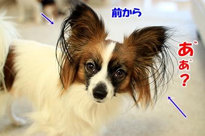 5_20110108181220.jpg