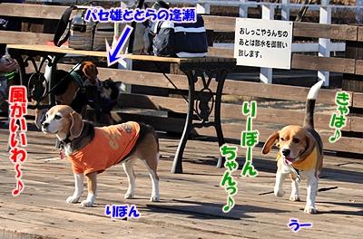 5_20110112214430.jpg