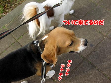5_20110208200846.jpg