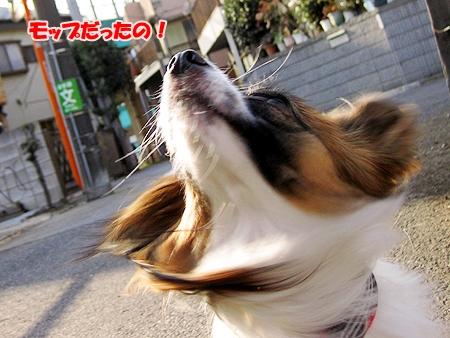 5_20110209012414.jpg