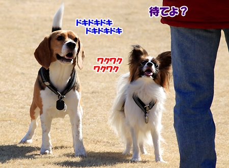 5_20110215212009.jpg