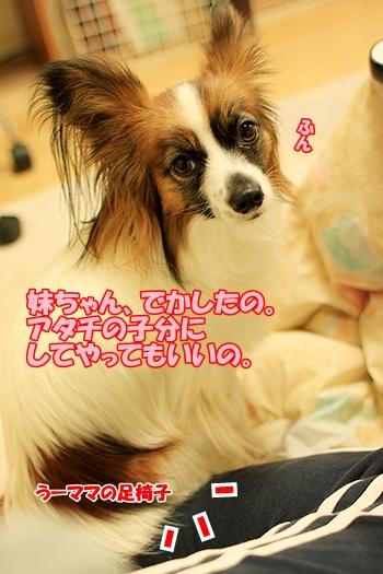 5_20110220214707.jpg