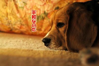 6_20100930220903.jpg
