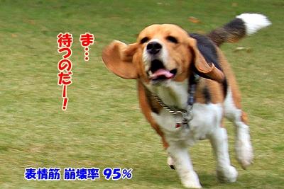 6_20101109230337.jpg