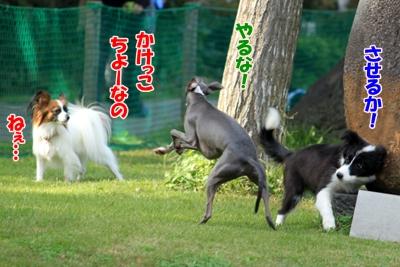 6_20101111235407.jpg