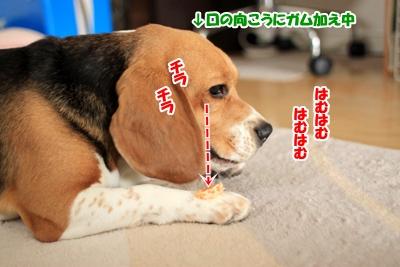 6_20101124133532.jpg