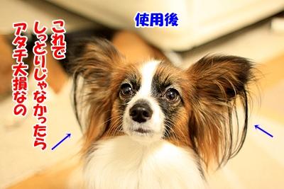 6_20110108181220.jpg