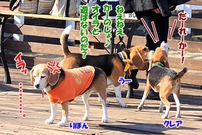 6_20110112214429.jpg