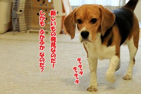 6_20110117194933.jpg