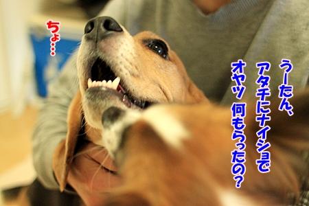 6_20110118194245.jpg