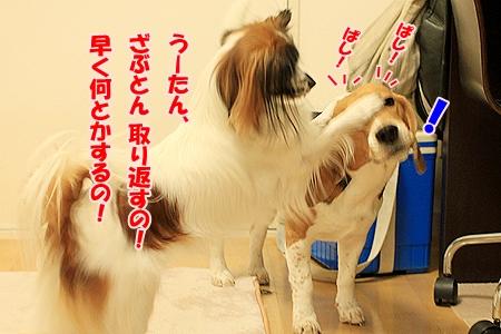 6_20110128212216.jpg