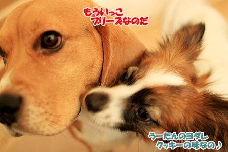 6_20110203230340.jpg