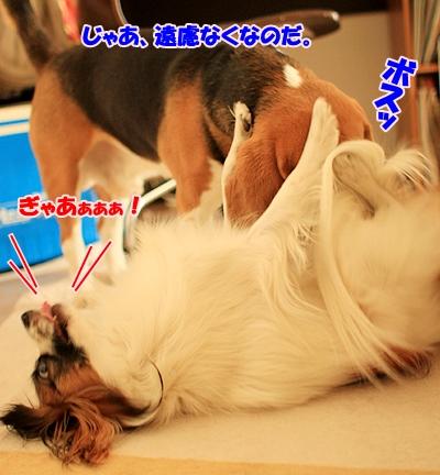 6_20110204193018.jpg