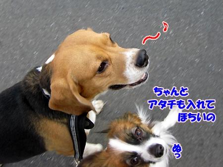 6_20110207210453.jpg
