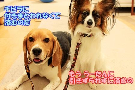 6_20110223001141.jpg