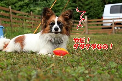 7_20101019234020.jpg
