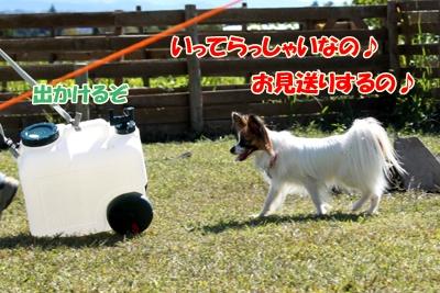 7_20101021095902.jpg