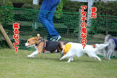 7_20101106190053.jpg