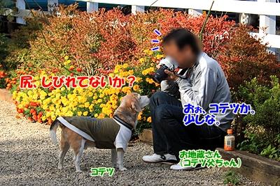 7_20101107230421.jpg