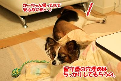 7_20101125230335.jpg
