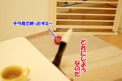 7_20101126214216.jpg