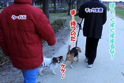 7_20110106151909.jpg