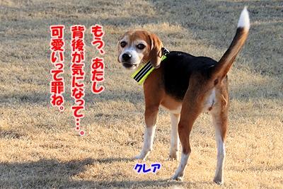 7_20110111221731.jpg