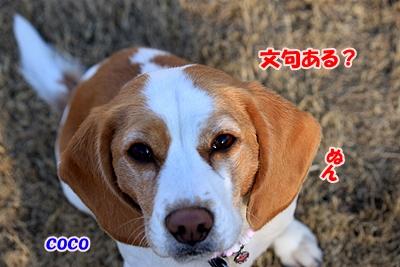 7_20110112231156.jpg