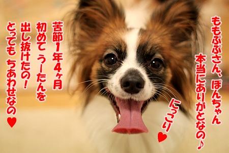 7_20110129174647.jpg