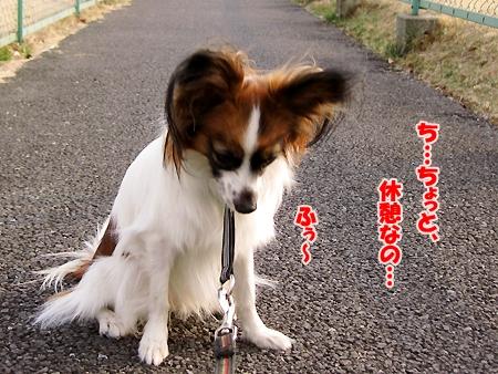 7_20110208200845.jpg