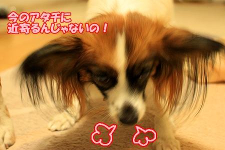 7_20110223200236.jpg