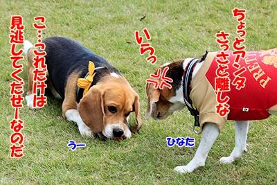 8_20101104205824.jpg
