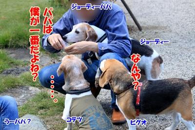 8_20101105220813.jpg