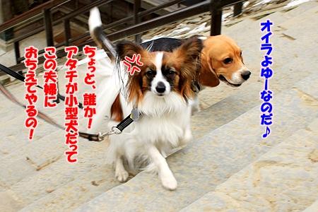 8_20110131224811.jpg