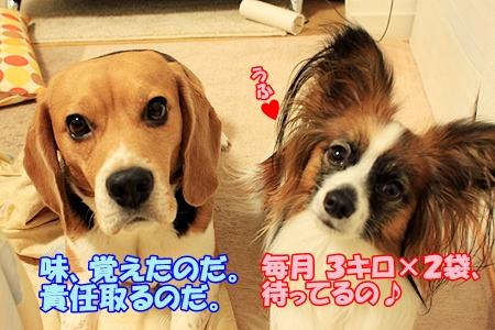 8_20110220213359.jpg