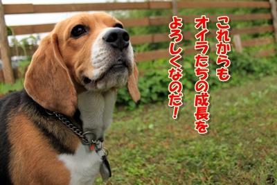 9_20101019234020.jpg