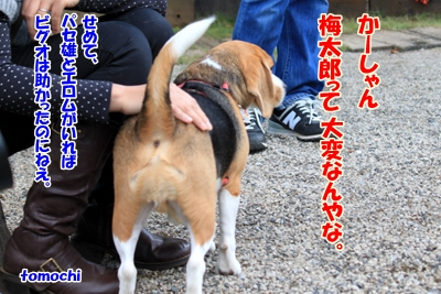 9_20101106190051.jpg