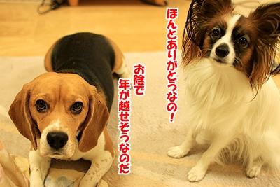 9_20101227222503.jpg