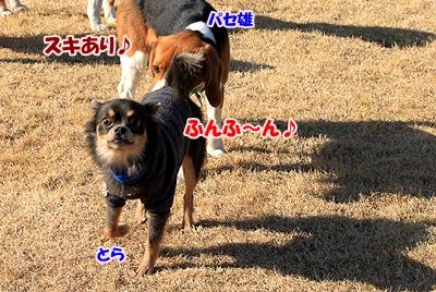 9_20110111221704.jpg