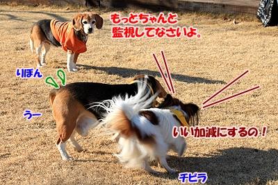 9_20110112214401.jpg