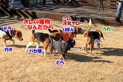 9_20110112231155.jpg
