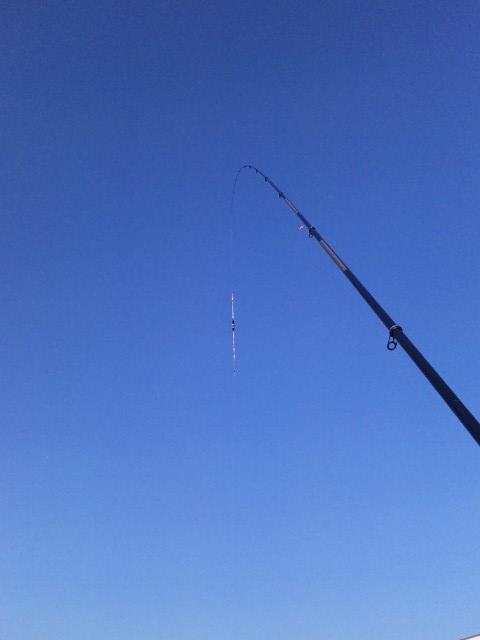 真っ青な空に竿とウキ♪