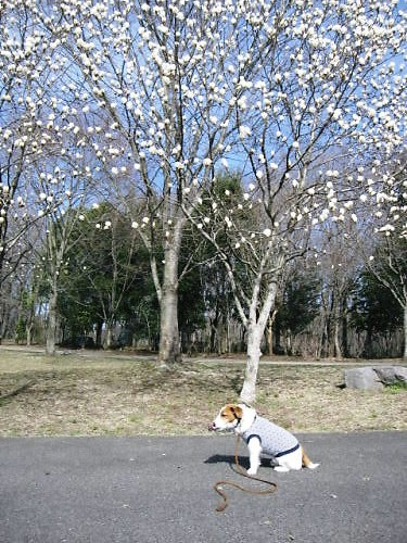 2011長岡公園189