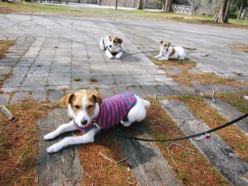2011長岡公園198