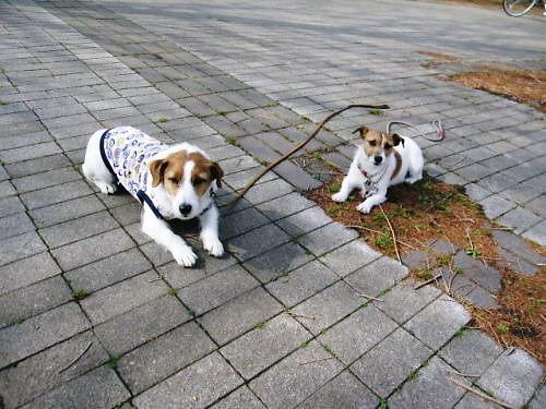 2011長岡公園199