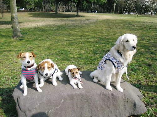 2011長岡公園200