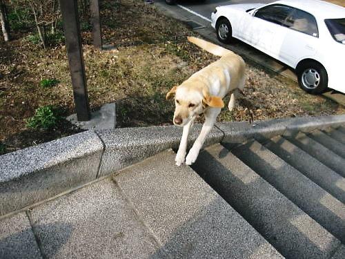 2011長岡公園205