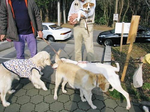 2011長岡公園206