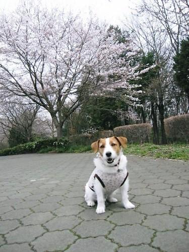 2011長岡公園208