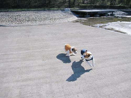 2011長岡公園218